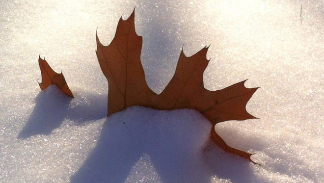 """FILE PHOTO 2015: Heather Lee Murphy of Hilton found this oak leaf poking out of the freshly fallen snow in her front yard.  """"I bent down low so I could capture the backlit sun as it cast a shadow and made the snow sparkle."""""""