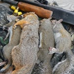 Spring squirrel season puts meat on the table and affords more time in the woods.