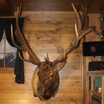 This historic elk mount will be on display at the Great American Outdoor Show in Harrisburg from Feb. 6-14.