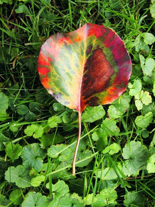 BUR20130905 leaves cover