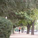 Several geese find shade in the shadows of large trees in Scottsdale's Chaparral Park on July 15, 2014. The park offers shady retreats, whether it's one of the four ramadas or shaded playground, or even one of the numerous park benches.