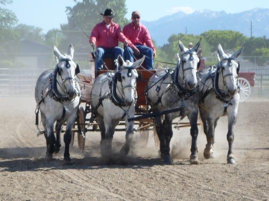 -Montana Mule Days.JPG_20140603 (2).jpg