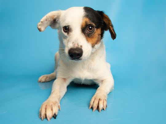 Half & Half is available for adoption at the Arizona