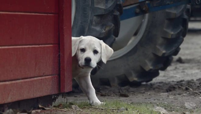 2015: BUDWEISER  ad meter winner 'Lost Dog.'