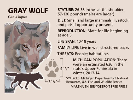 Mi  Isle Royale Challenge  Rescue Wolves  Keep Moose In