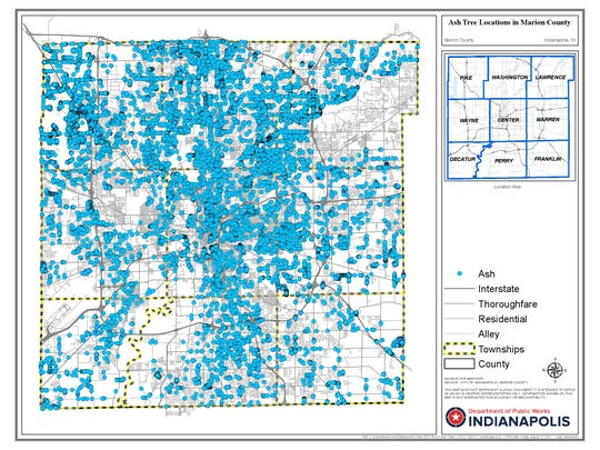 This map shows the locations of the thousands of ash trees around Marion County, based on a recent survey of the street trees around Indianapolis. Based on this inventory, the Department of Public Works in the coming years is planning to remove more than 20,000 ash trees that are dying or dead from emerald ash borer.