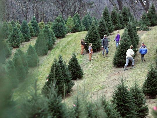 The Tumblin family searches Scheetz Tree Farm for a