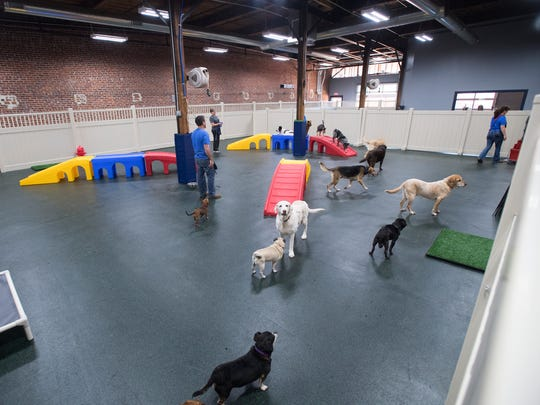 Dogs play in the Fitness Center of The Noble Dog Hotel on Wednesday, May 10, 2017.