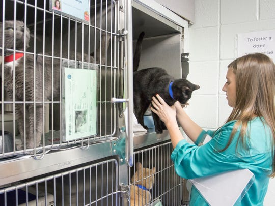 Dr. Johnna Lee checks on the cats in the kennel at the Escambia Animal Services in Pensacola on Friday, October 27, 2017.  Lee has recently filled the full-time veterinarian position that was vacant for the past year.