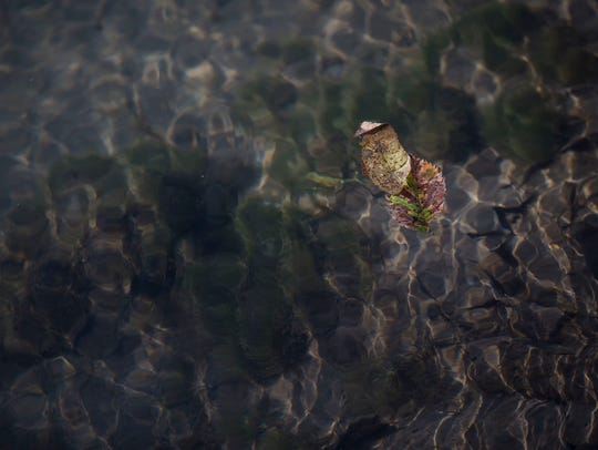 Two leaves float on the surface of Bloody Run Creek,