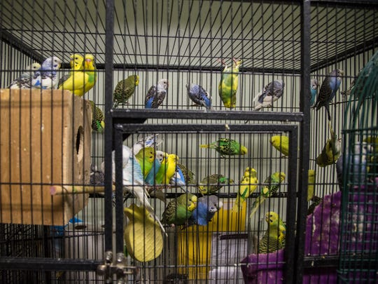Hundreds of animals including many birds rescued from