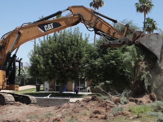 Removal begins on a row of Tamarisk trees that separates