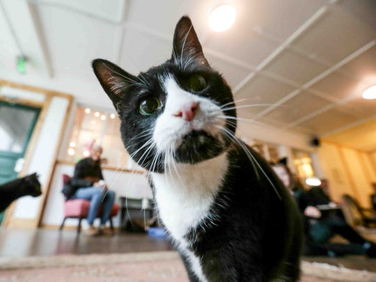 Nine Lives Cat Cafe, 1315 Shelby St. in Indianapolis,