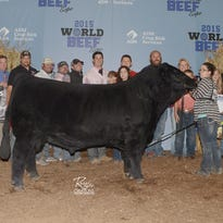 Mikaela Kinning of Osseo exhibited the champion Junior Prospect Steer at the 2015 World Beef Expo.