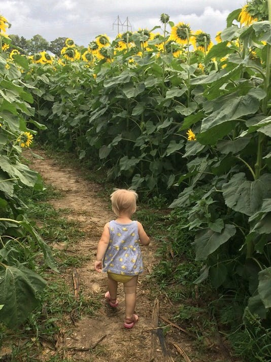 636686563595468974-kid-in-sunflower-maze.jpeg