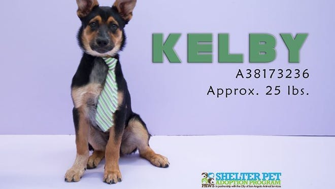 Kelby, available for adoption at the Concho Valley PAWS free pet adoption event, April 2, 2018.
