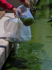 Water samples are collected for testing purposes from