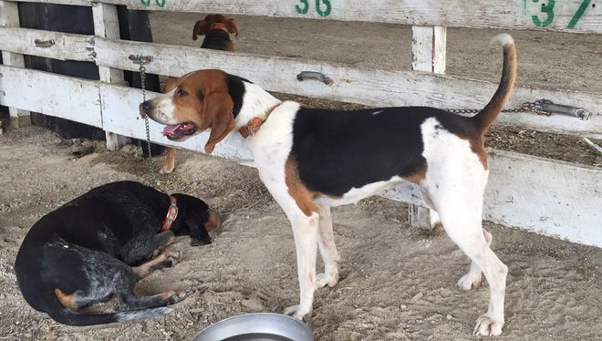 These dogs were at the Wayne County Fairgounds for the annual United Kennel Club's annual Autumn Oaks event.