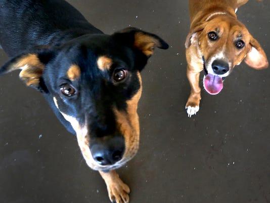 635896744792023394-3-Puppy-bowl-Dogs.jpg
