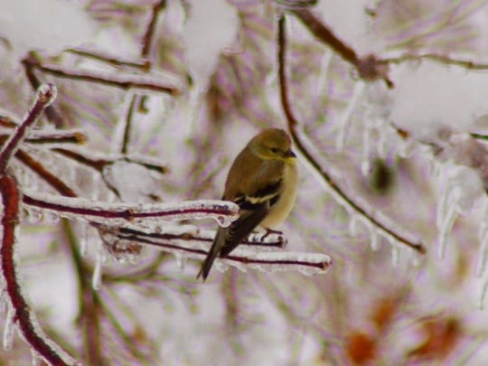 Birds survive the winter by using their natural insulation.
