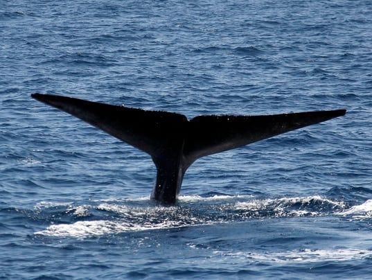 AP Whale Watch