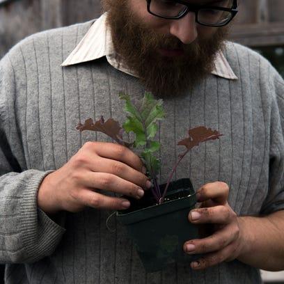 Nate Kleinman inspects a seedling Blauwe Groninger