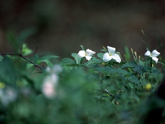 Look for displays of wildflowers during the first warm