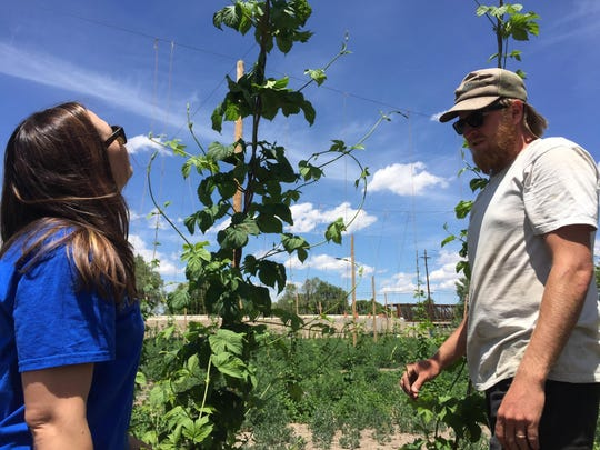 Kim Kelly, left, and Blaine Pickett of Urban Roots, examine hops plants at the group's experimental hops field at the University of Nevada, Reno farm.