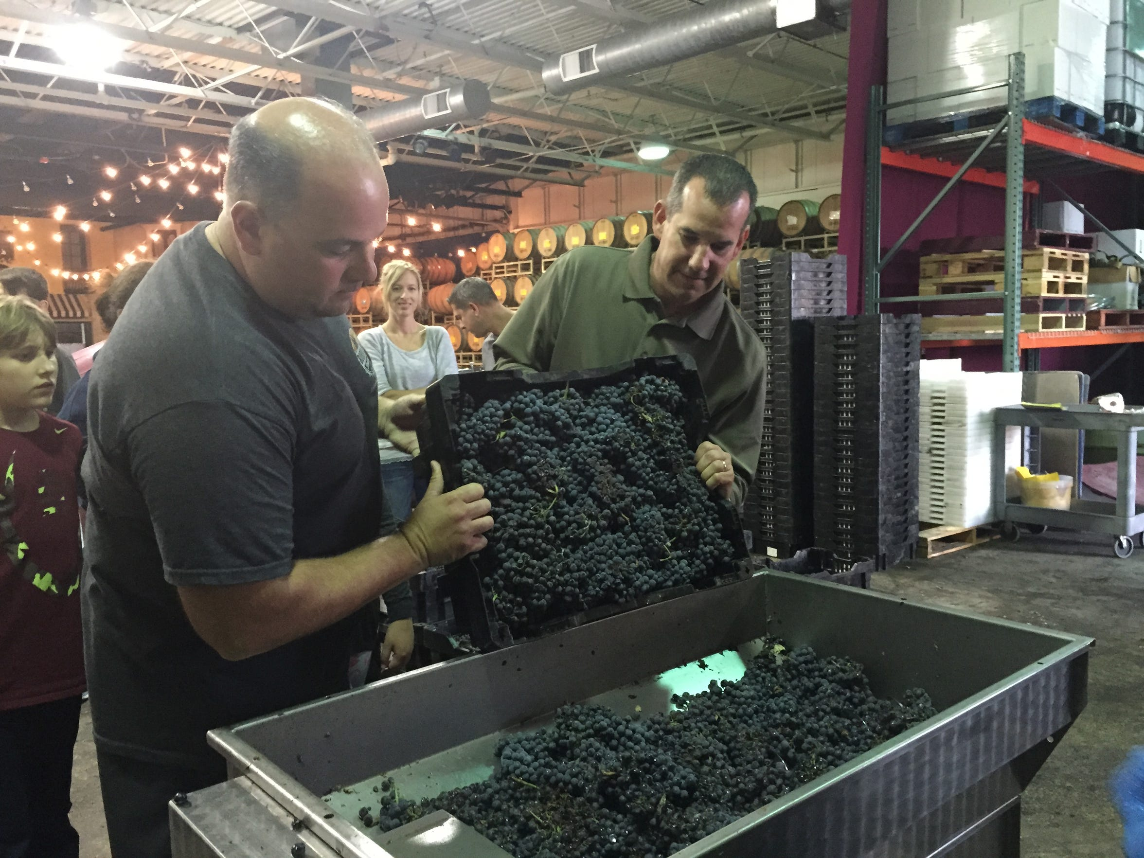 Dominic Anzideo of Voorhees (left) and David Imperatore of Cherry Hill dump fresh grapes into a machine for crushing and stem removal as they begin the process of making their own wine Sunday at the Wine Room in Cherry. Each of six families in their group will receive about 40 bottles of wine next year