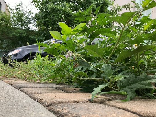 The city is seeking a contractor to handle median maintenance, including weed removal, along College Street downtown.
