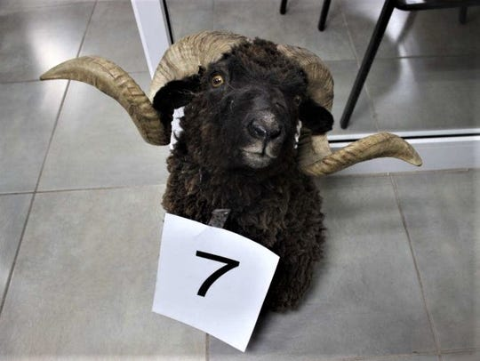 This is one of 65 stuffed animals found in a commune