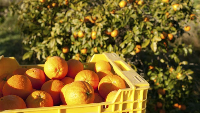 If you are looking for something to do with your excess citrus, why not donate it?