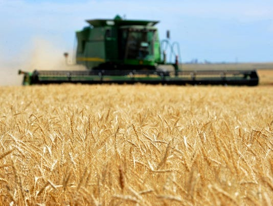 -07212015_gasvoda, wheat harvest-a2.jpg_20150722.jpg