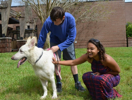 UCF-area shelters offer $12 adoptions