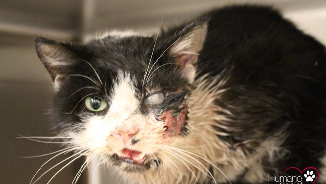 Bart the cat survived being hit by a car Jan. 15, 2015, and being buried for five days.