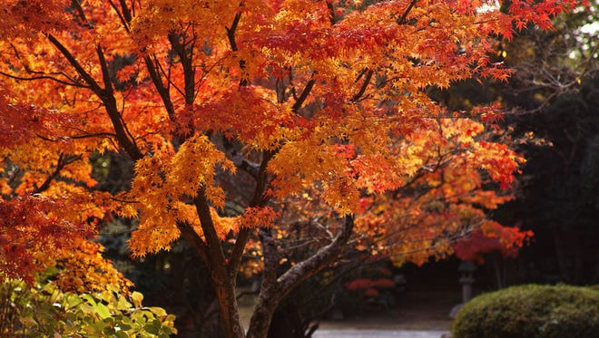 Trees are valuable investments in the future, so get them off to a good start with a new interactive app from OSU Extension.