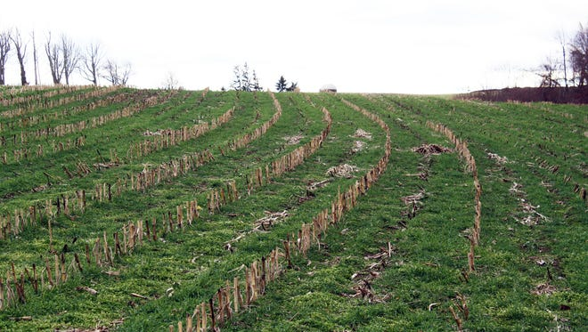 Many research and demonstration projects have focused on using cover crops for spring grazing or spring harvest, but few have focused on the use of cover crops for fall feed.