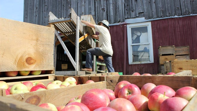 Stan Carlson dumps hand-picked Chapin Orchard apples into the washer.