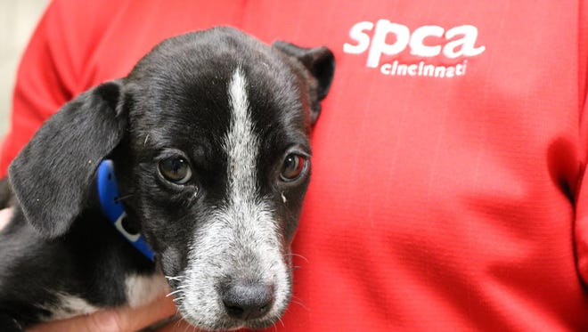 SPCA Cincinnati and Pizzeria Locale are partnering up July 20 to raise money for the shelter's dogs and cats.