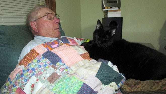 The cat finds a comfy spot for a cat nap.