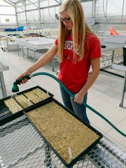 Plymouth student Erica Helmer waters planted seeds Wednesday October 21, 2015 in Plymouth.