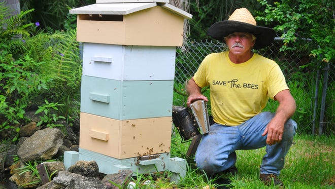 Clifton Best is president and founder of the Brevard Backyard Beekeepers Inc. and owns CL Best Honey Bees. He also does professional bee removal service. Clifton by a Ware´hive full of honeybees.