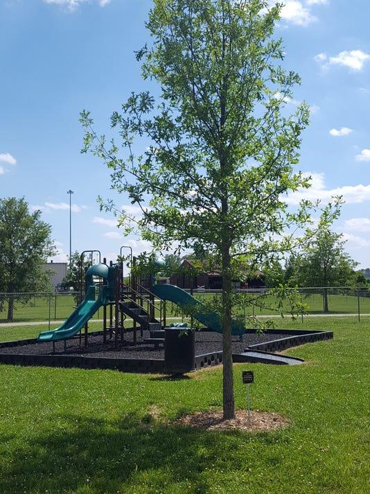 636326270915618074-tree-picture-2.jpg