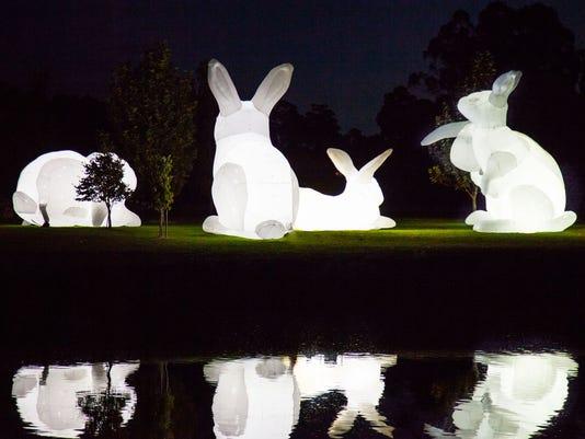636413499488395612-bunnies-6.jpeg