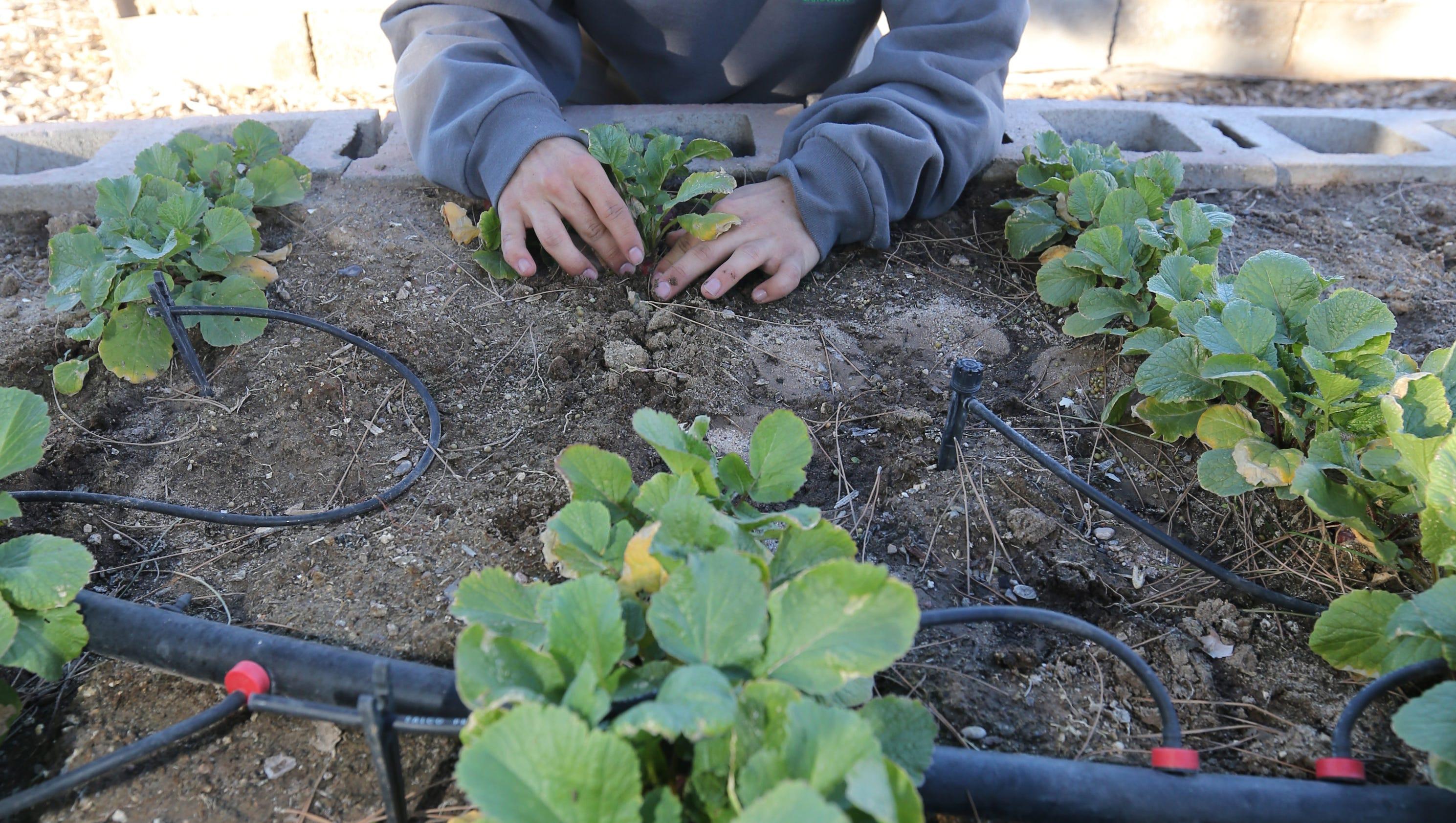 El Pasoan Breaks New Ground As Youngest Master Gardener