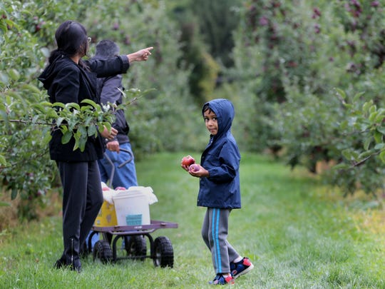 Wohaan Dissanayake, 6 years old of Pittsford, picks apples with his family at G and S Orchards in Walworth in 2016.