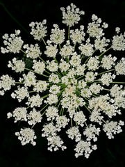 Dozens of flowers only 2 millimeters create a pattern