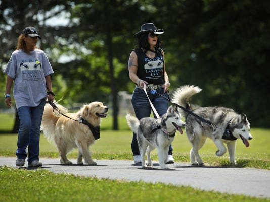 Plucky pooches raise money for cancer research