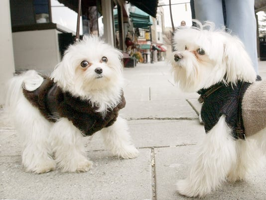 20150112_commons_dogs