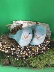 Exotic birds that Sal Salafia sells at his store at